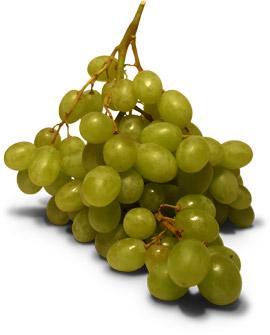 Hroznové víno pěstování