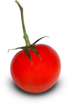 Zajímavosti - rajčata