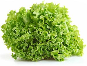 Zajímavosti - saláty